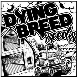 Dying Breed Seeds - Cannabis Seed Breeder